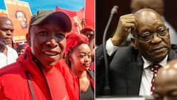 Julius Malema joins citizens to pray for Mzansi, suggests he'll go fetch Zuma
