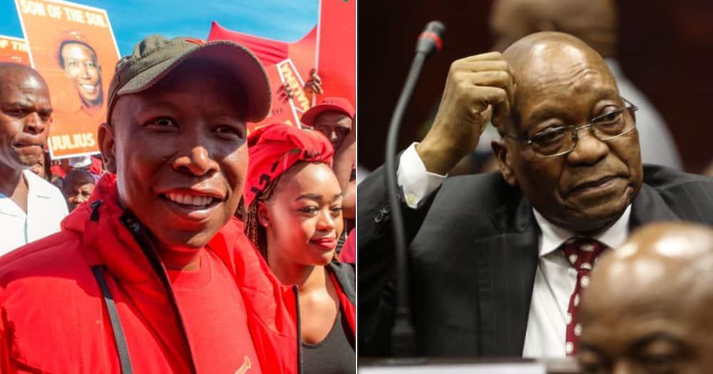 Julius Malema, Pray For South Africa, Jacob Zuma