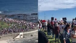 Over 600 Illegal marchers fail to change minds, anti-vaxxers to be charged in Cape Town