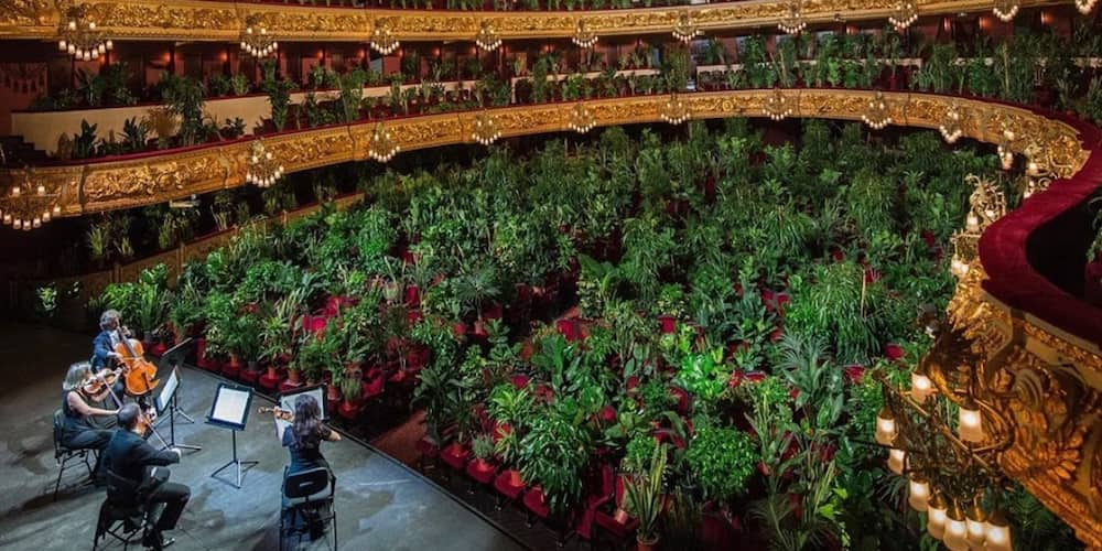 2,292 plants in Barcelona treated to 8-minute long first opera perfomance since lockdown