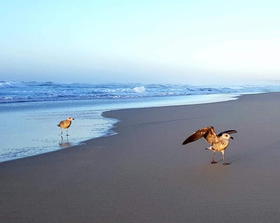 beaches in South Africa information