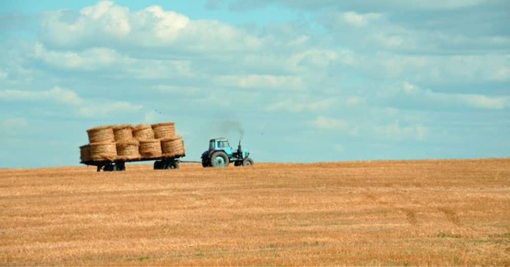 US, Farm Sued, Hiring White, SA and Pays, More, Locals