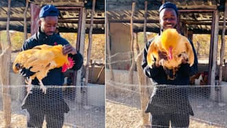 Halala: Farmer wows SA after sharing how his side hustle has grown in 4 years