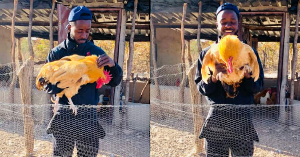 Farmer, then and now, Chicken, Eggs, Inspirational, Twitter reactions