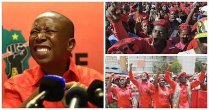 EFF projected to double its voter share in the 2019 general election