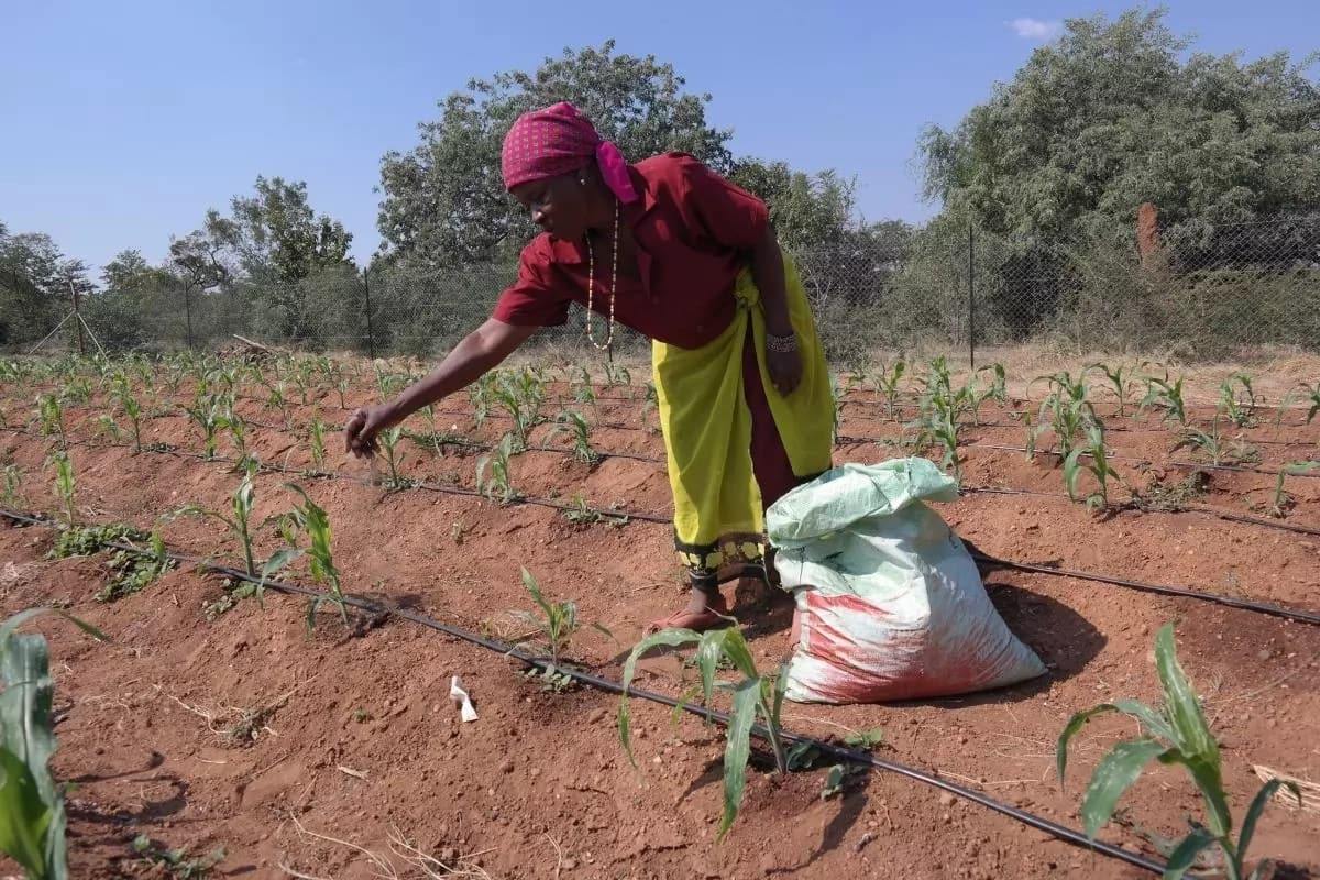 KZN women farmers have benefitted from the R102m uMgeni Resilience Project. Source: vukuzenzele.co.za