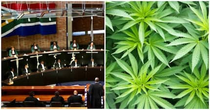 SA reacts to news that the private use and cultivation of dagga is decriminalised