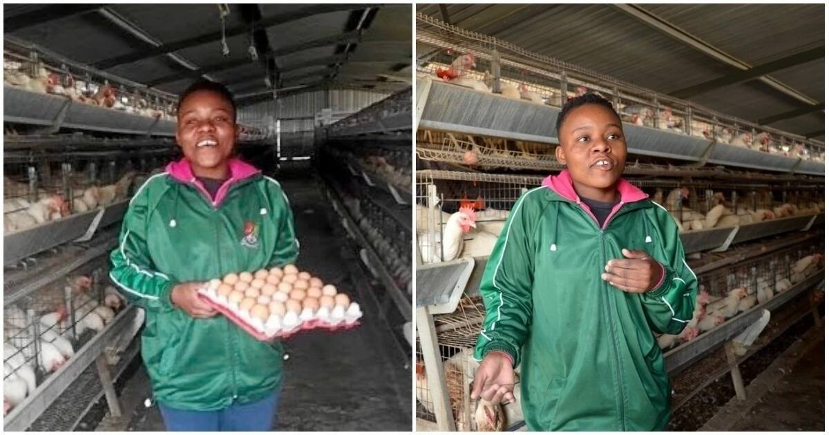 Young farmer Mbalentle Sipengane takes family business to new heights