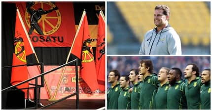 Cosatu once again attacks SA Rugby, focuses on Springbok coach Rassie Erasmus