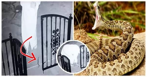 Her dog left a toy by the gate, so she went there to pick it up. But when she touched it, she started screaming as it was a deadliest snake!