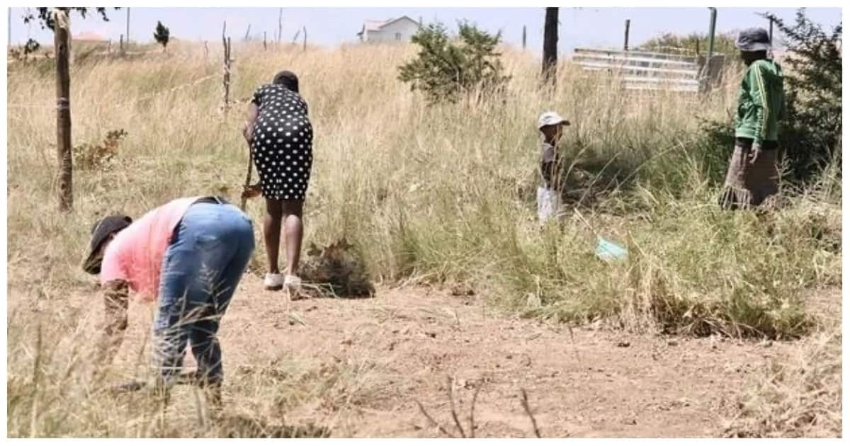 EFF encourages illegal land grabs at R100 a plot