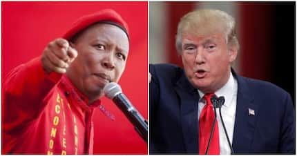 """Julius Malema weighs in on Trump's tweets: """"Only death will stop us"""""""