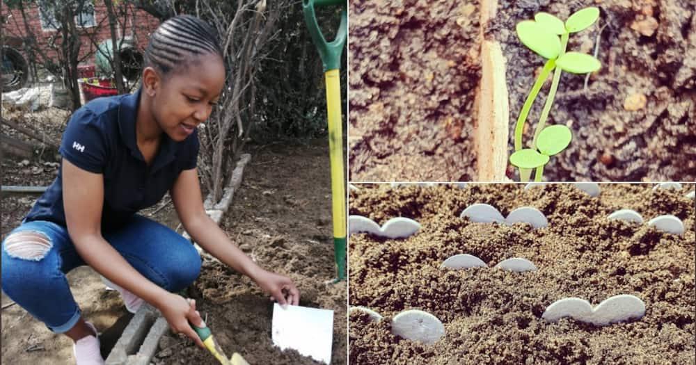 Woman, Seeds, Business, Twitter reactions, Inspiring