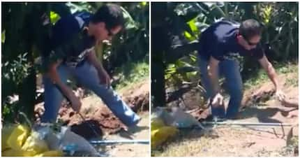 Video captures terrifying moment man catches 1.4-metre spitting cobra