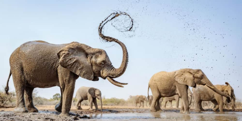 Namibia To Auction 170 Elephants Over Drought, Increased Population