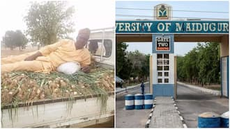 University professor harvests onions from his farm, shows them off in viral photo