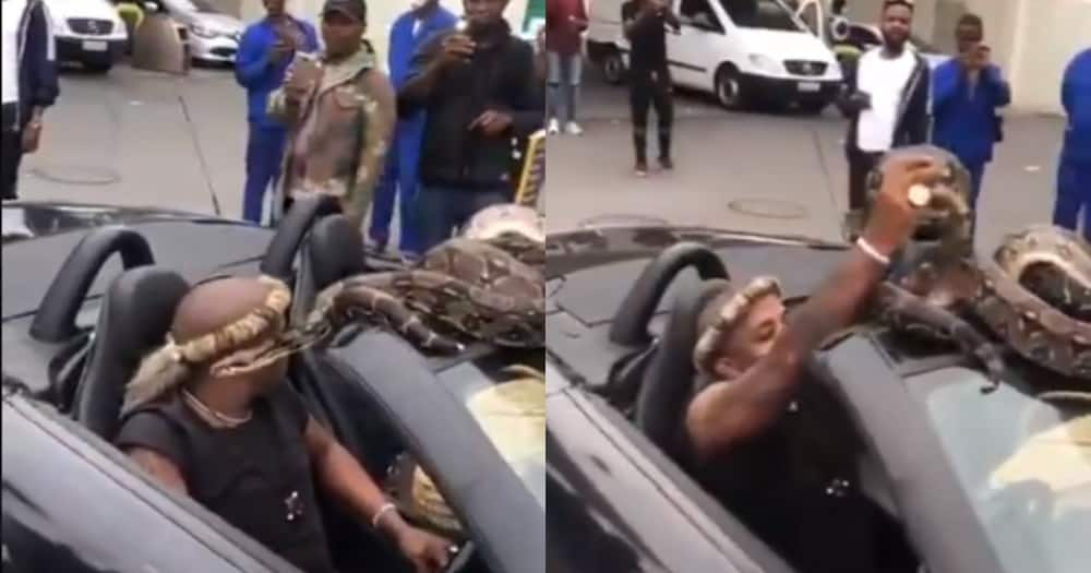 Viral Video of Man Driving with Large Snake Leaves South Africans bewildered