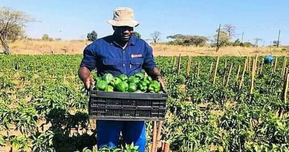 Local farmer, inspiration, motivation
