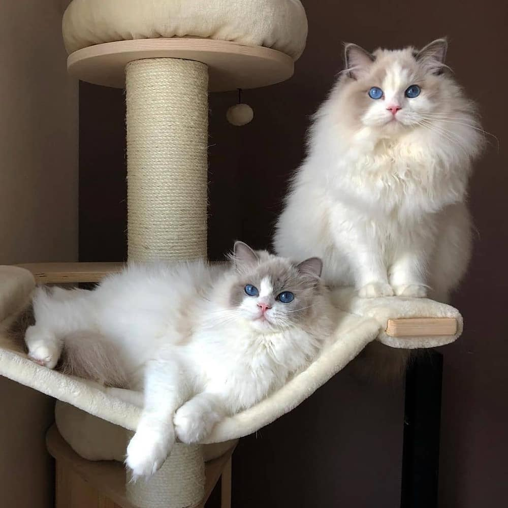 Most expensive cats prices