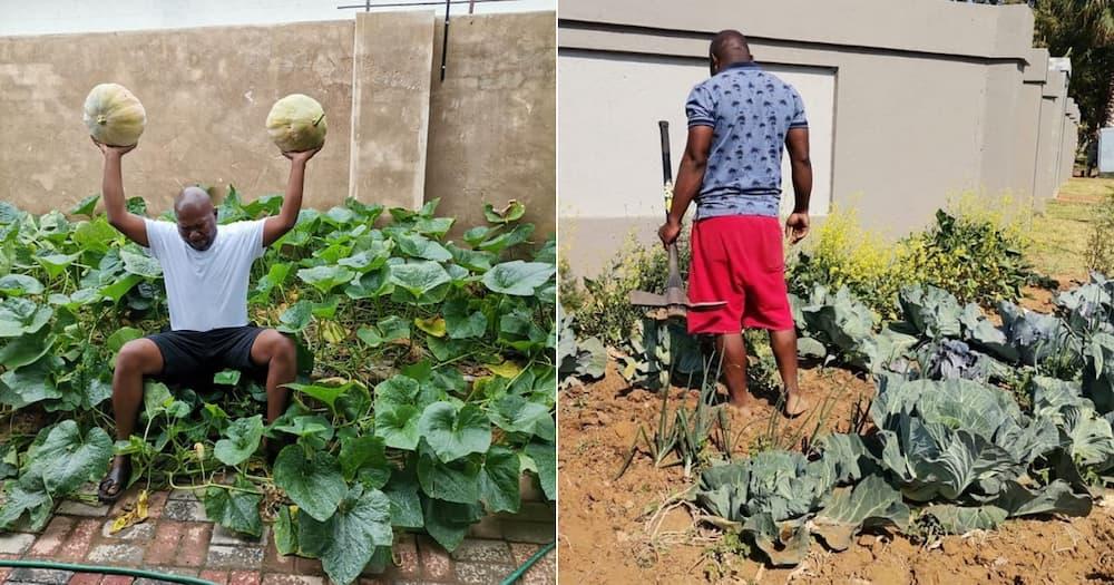 Tshwane Man, vegetable garden, police, fine, by-laws
