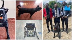 3 Talented students build remote controlled dog as final year project, photos go viral