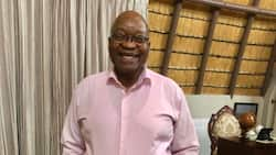 Company which gifted cattle to Zuma refuses to give info about tenders