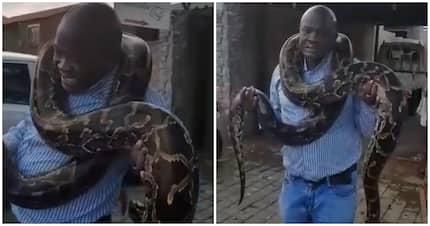 Hilarious video shows man with giant snake freaking out in fear