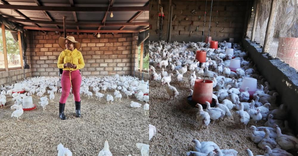 """""""This Is a Big Move"""": Young Farmer Scores Big Chicken Supply Contract"""