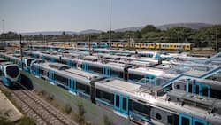 Prasa's R200 million plan to hire volunteers as 'guards' put on hold