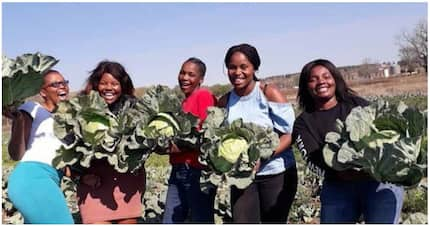 KZN's Nyamvubu agricultural cooperative mints money for its members