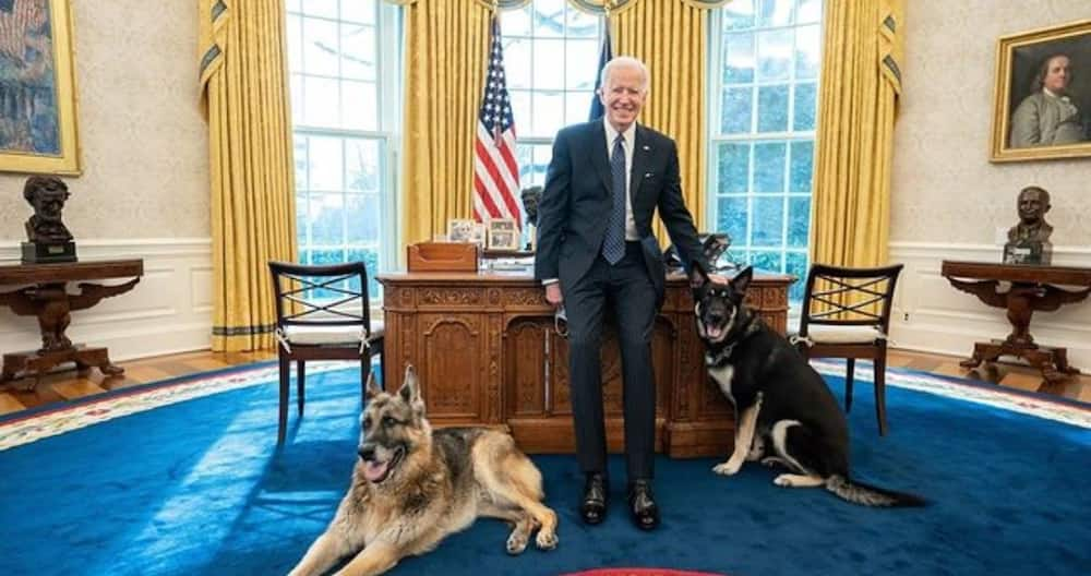 Joe Biden's Dog Major to Get Extra Training after Two Biting Incidents