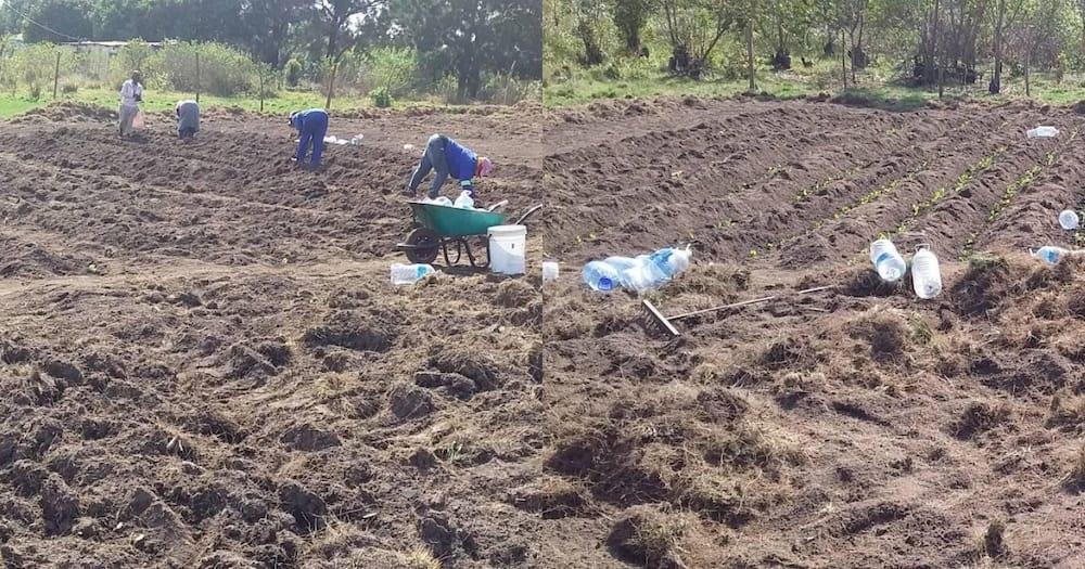 Innovative lady starts community garden to help her village youths
