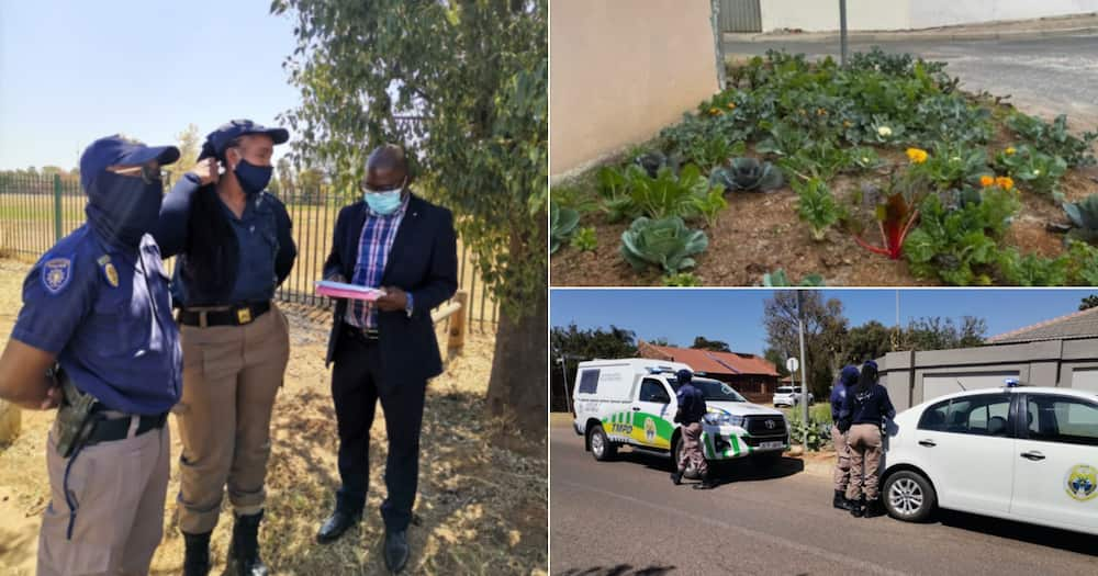 City of Tshwane, Joe Nkuna, Defends, Pavement, Vegetable garden, Cabbages