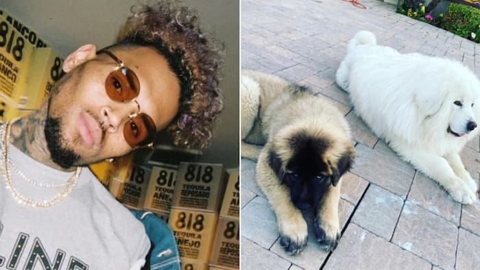 Chris Brown allegedly covers for his pooch after attacking housekeeper, she's suing