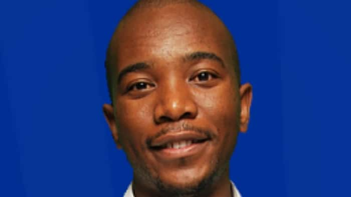 Mmusi Maimane claps-back at man who trolled his organisation's advert, calling him prophet of doom pesticide