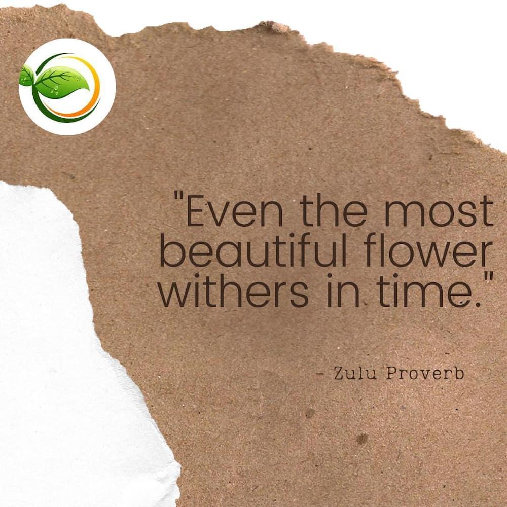 50 Zulu proverbs