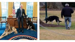 Joe Biden's dogs evicted from White House after biting incident
