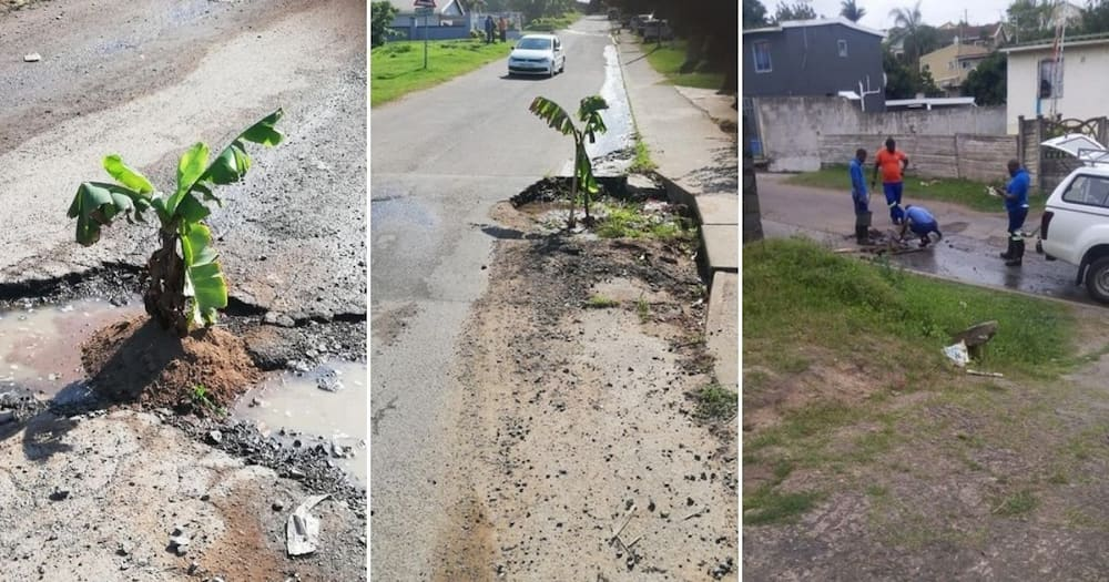 Fed-up man plants trees in potholes, forces municipality to fix them
