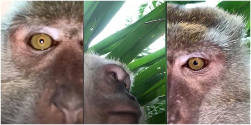Monkey steals phone inside man's apartment, takes selfies and video with device