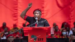 """""""These wine farms, they are ours"""": Malema promises to expropriate Stellenbosch land"""