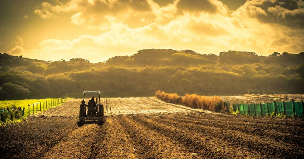 Tea farm, Limpopo, government, farming, R104 million, loss, skills, land expropriation