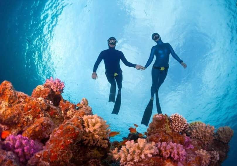 Reef Egypt
