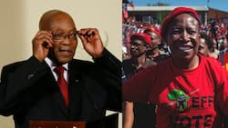 """Julius Malema wants Jacob Zuma to make a decision about his political career: """"I bow for those wise words"""""""