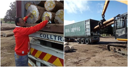 KZN entrepreneur Xolani Ntuli wins contract to supply timber to China