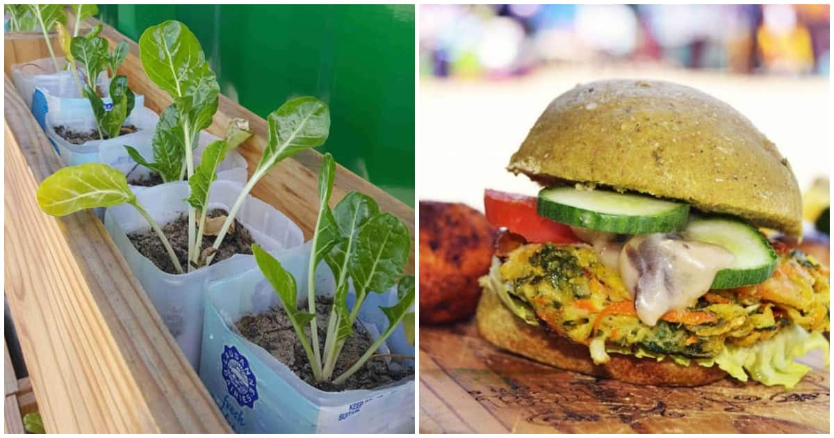 Lufefe, the Spinach King, rebuilds Khayelitsha one loaf at a time