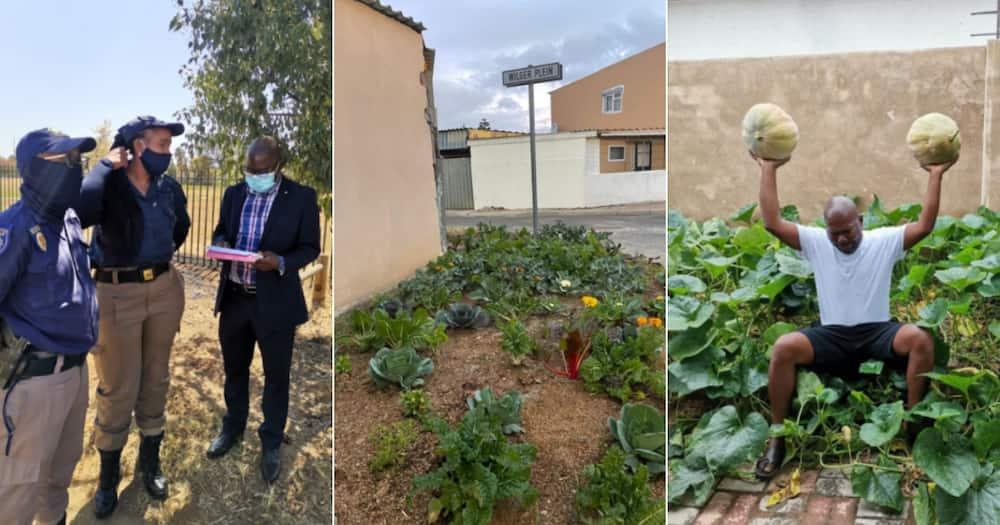 Djo BaNkuna, Vegetables, Sidewalk, Community, Support, Social media reactions