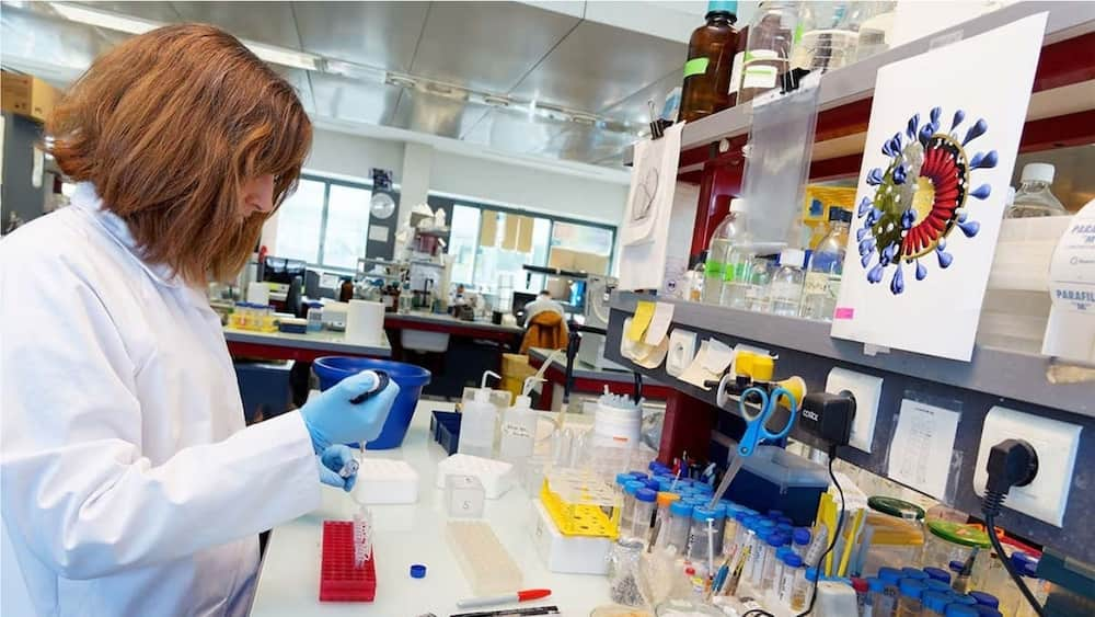 A random picture showing a scientist in the lab. photo source: The Scientist