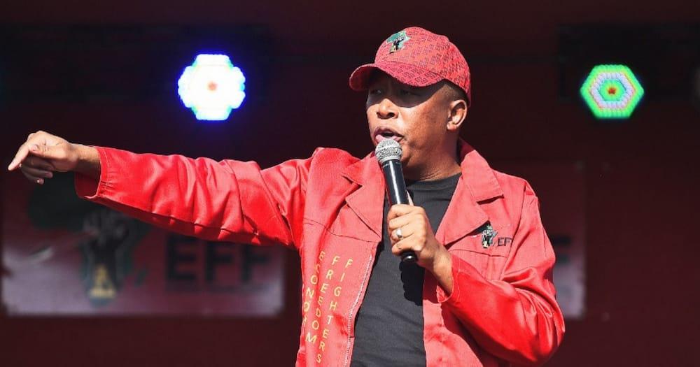 local government elections, Julius Malema, EFF, Sassa