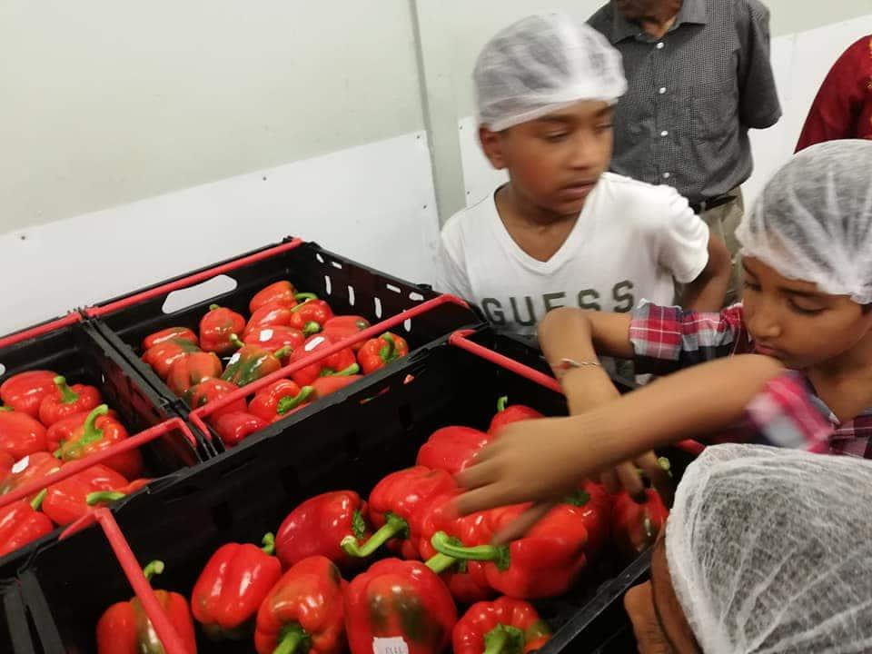 KwaSizabantu sweet pepper