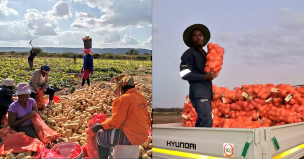 Lady Farmer, Own business, Empowers other women